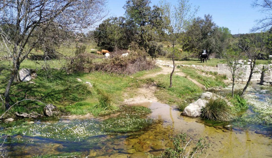Lugares de Madrid para montar un picnic en familia con los niños
