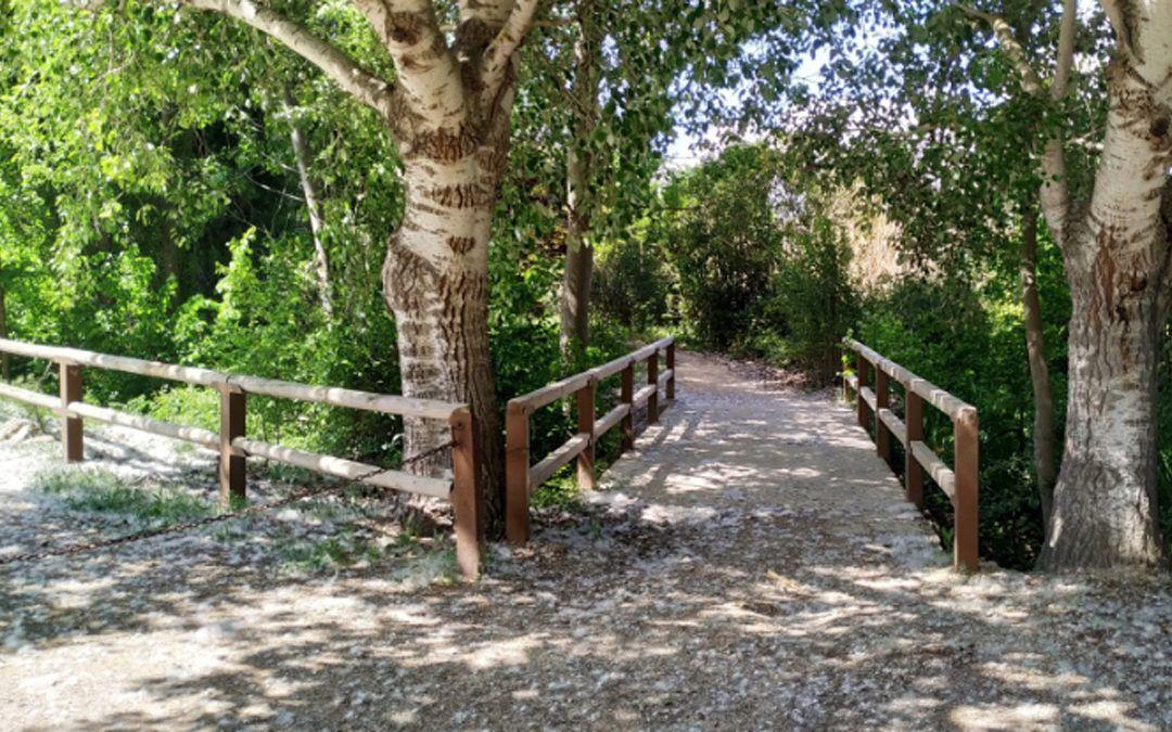 Senda 'El bosque' en Morata de Tajuña y visita al museo de la molinería